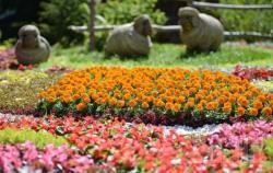 На Певческом поле в Киеве открылась выставка цветочных композиций ко Дню независимости