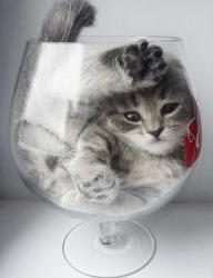 Кошки- это жидкость: в США состоялось вручение Шнобелевской премии