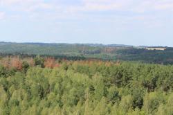 В Житомирской области массово усыхает лес