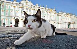 Коты из Эрмитажа погибли при пожаре в музее