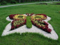 В этом году в Киеве высадят 13 миллионов цветов