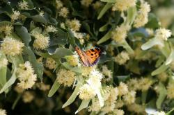 Нашествие бабочек в Киеве