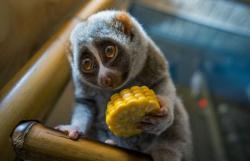 4 октября - День защиты животных