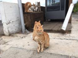 Во Львове посчитают бездомных котов