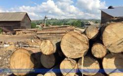 Рада запретила сплошную вырубку лесов на горных склонах Карпат