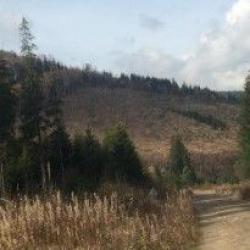 В Украине вступил в силу закон о запрете вырубки леса на склонах Карпат