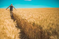 Президент инициирует уменьшение концентрации сельхозземли в одних руках до 10 тысяч гектаров после открытия рынка