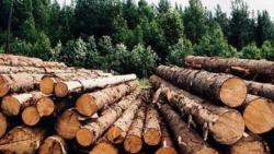 С 1 февраля в Украине заработает централизованный учет древесины