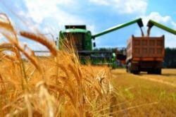Правительство направило 555 млн гривен на погашение долгов перед аграриями