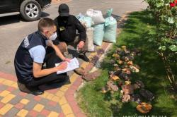В Ровенской области правоохранители изъяли более 858 килограммов янтаря